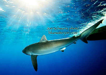 Underwater hawaii fish fenjin sea nature sky 1920x1080px wallpapers